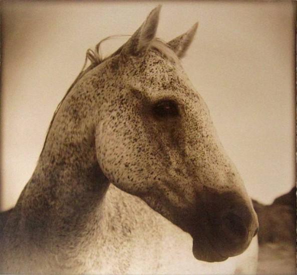 Thomas Hager (LA), Horse at Dawn,2/12 2012, kallitype