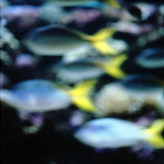 John Huggins (Once), Aquarium #1, Sydney, Australia, ed. of 23 2014, pigment print