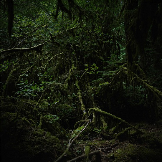 Jason Frank Rothenberg, Quinault (Interior #2), Edition of 8 2014, archival pigment print