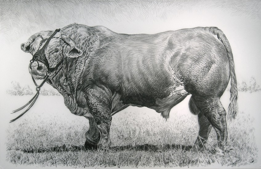 Rick Shaefer, Bull 2014, charcoal on vellum
