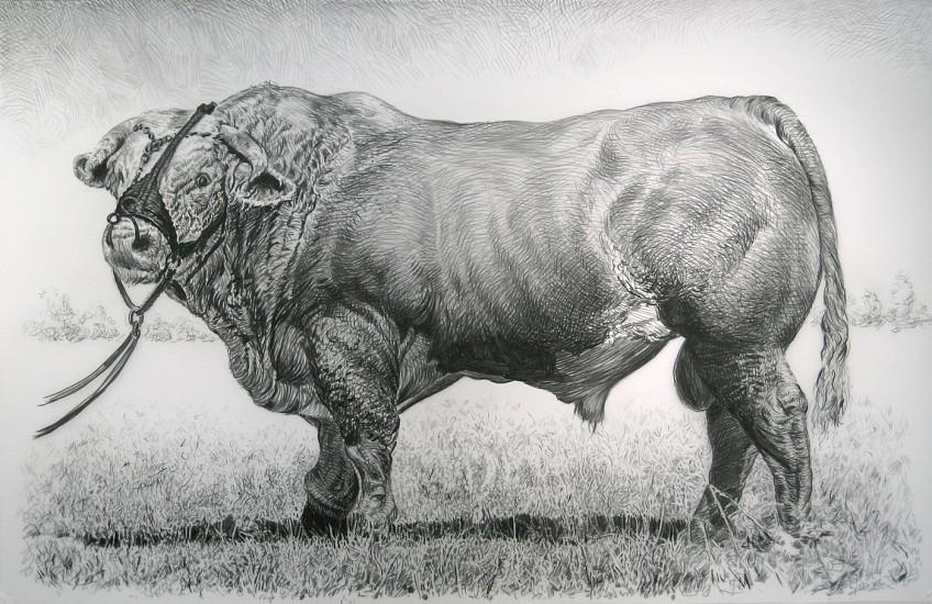 Rick Shaefer, Bull 2014, charcoal on vellum