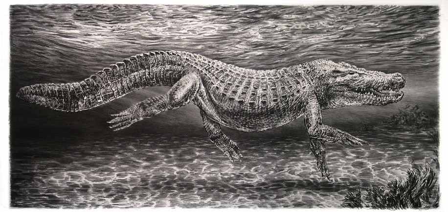 Rick Shaefer, Alligator 2015, charcoal on vellum