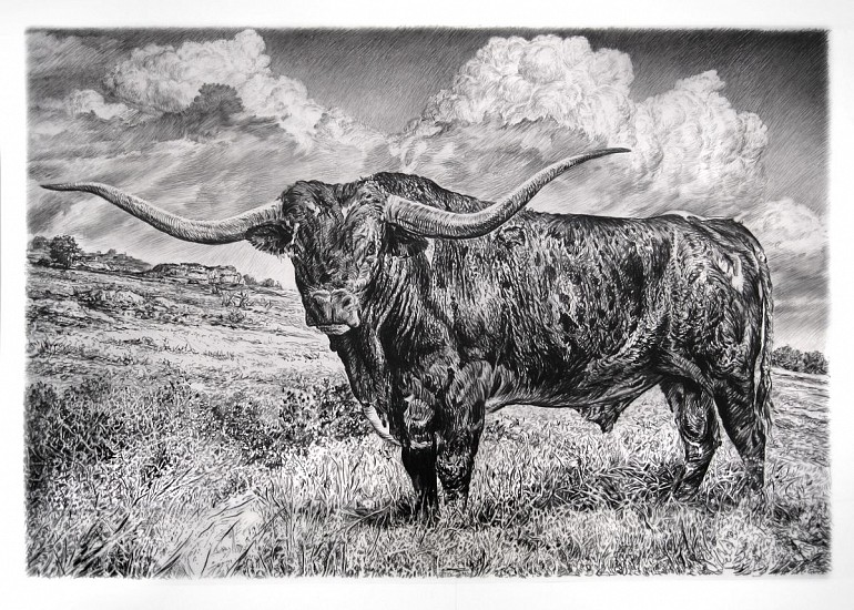 Rick Shaefer, Longhorn 2015, charcoal on vellum