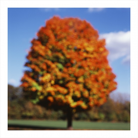John Huggins (Once), Tree, Illinois, ed. of 23 2015, pigment print
