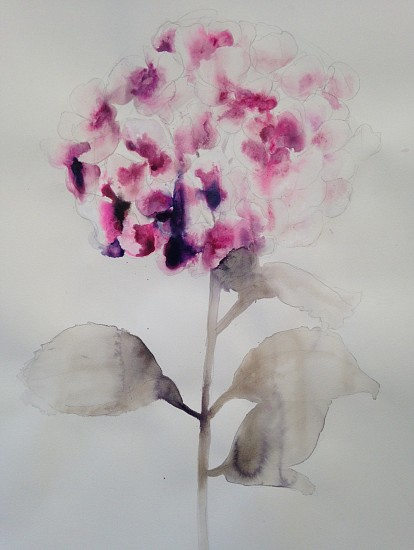Lourdes Sanchez (Watercolor), Hydrangea, Pink Centers 2016, watercolor on paper