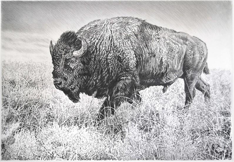 Rick Shaefer (LA), Bison VI 2016, charcoal on vellum