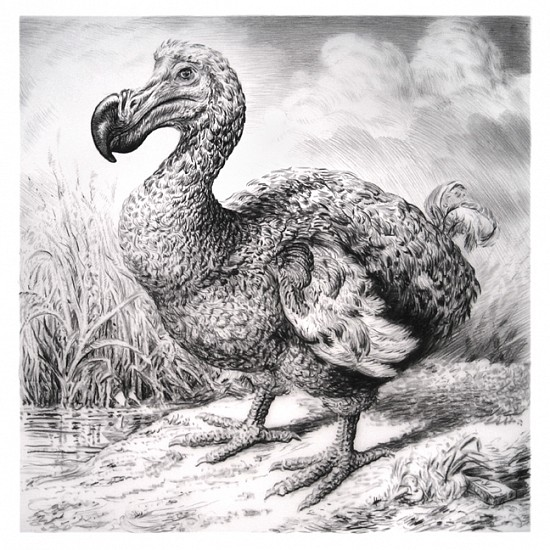 Rick Shaefer, Dodo 2016, charcoal on vellum