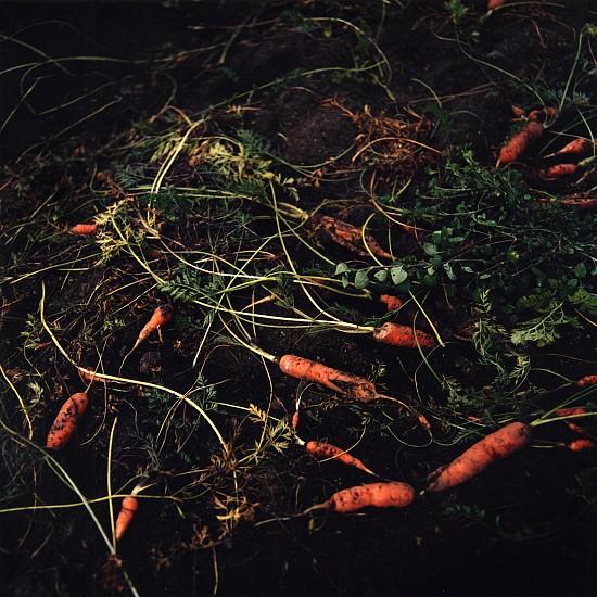 Jason Frank Rothenberg (LA), Carrots, Edition of 8 2014, c-print