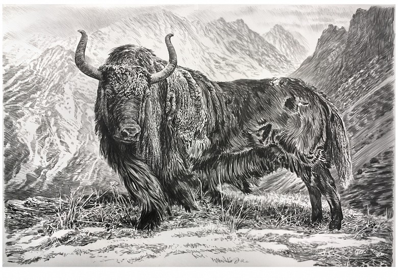 Rick Shaefer, Yak 2017, charcoal on vellum