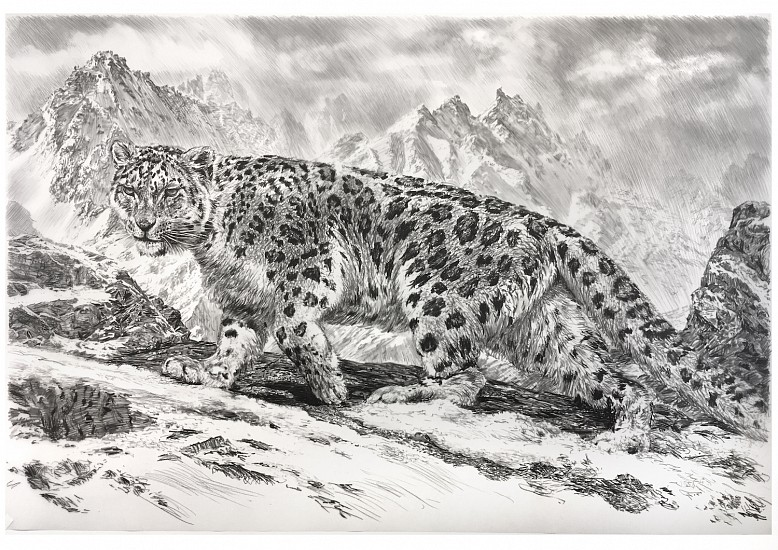 Rick Shaefer, Snow Leopard 2017, charcoal on vellum
