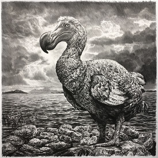Rick Shaefer, Dodo II 2017, charcoal on vellum