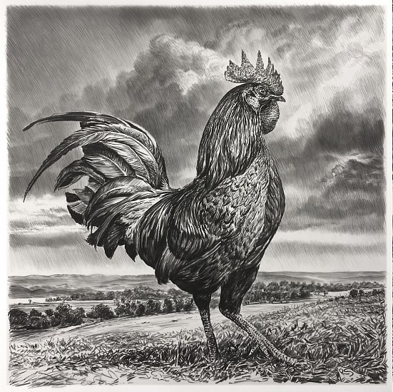 Rick Shaefer, Rooster 2017, charcoal on vellum
