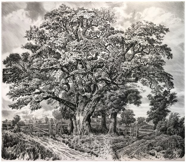 Rick Shaefer, Large Oak 2017, charcoal on vellum on paper