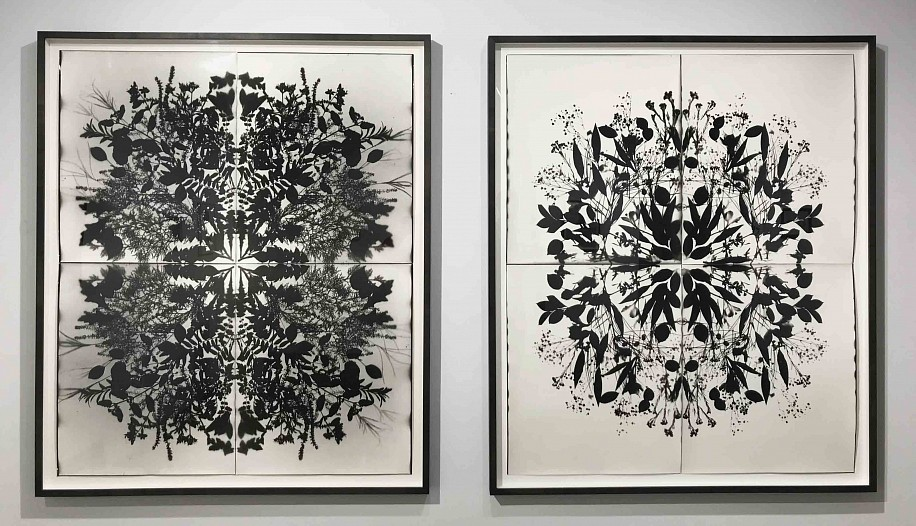 Wendy Small, Remedy Series Installation 2017, photogram