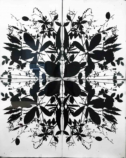 Wendy Small, Remedy Indian Lane 1 2018, black and white photogram
